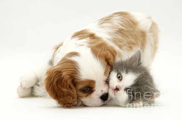Animal Photograph - Dog And Cat by Jane Burton