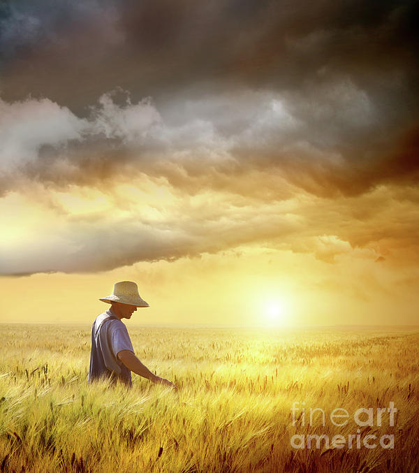 Agricultural Photograph - Farmer Checking His Crop Of Wheat  by Sandra Cunningham