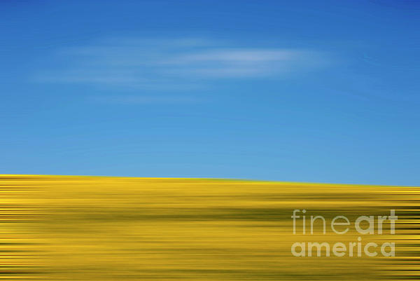Abstract Photograph - Field Of Sunflowers by Bernard Jaubert