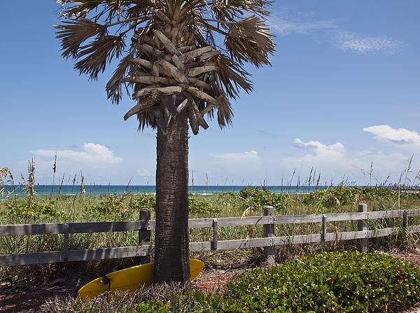 Florida Photograph - Juan Ponce De Leon Landing Site In Florida by Allan  Hughes