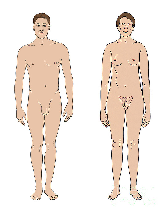 Person  - Klinefelters Syndrome & Healthy Male by Science Source