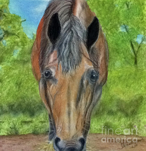 Horse Pastel - Lilly by Teresa Vecere