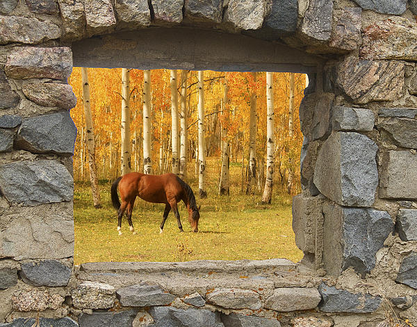Horse Photograph - Stone Window View And Beautiful Horse by James BO  Insogna