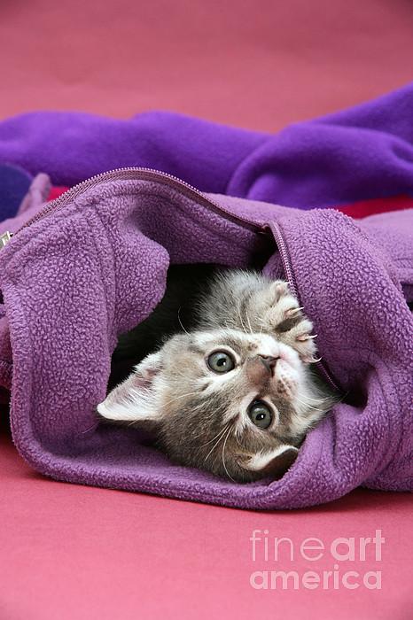 Animal Photograph - Tabby Kitten by Jane Burton