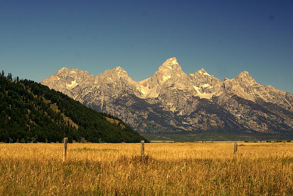 Grand Teton National Park Photograph - Tetons 3 by Marty Koch
