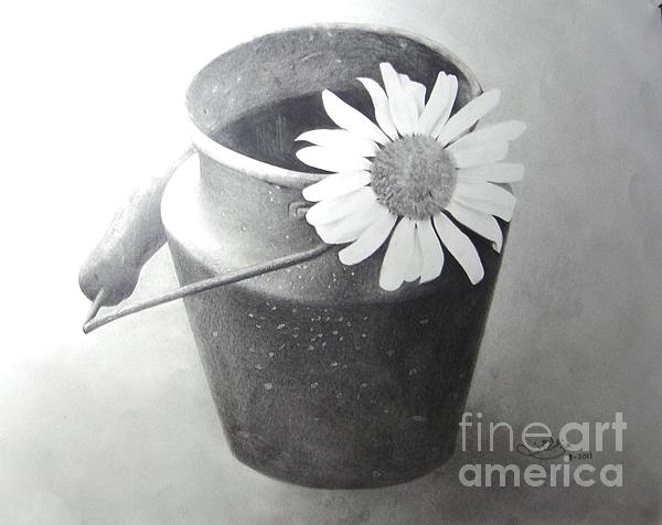 Pencils Drawing Drawing - White Daisy by Muna Abdurrahman