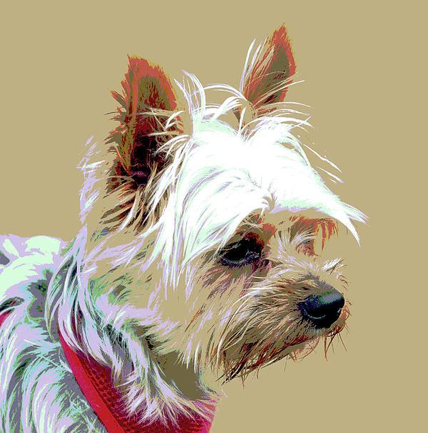 Dog Digital Art - Yorkshire Terrier by Dorrie Pelzer