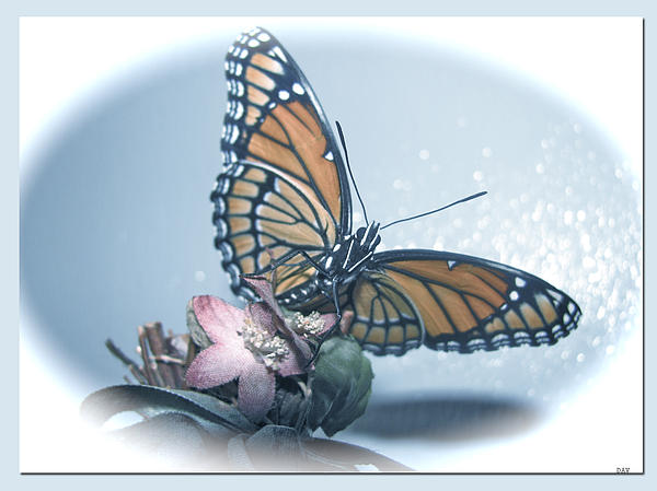 Nature Photograph - Butterfly Collection Design by Debra     Vatalaro