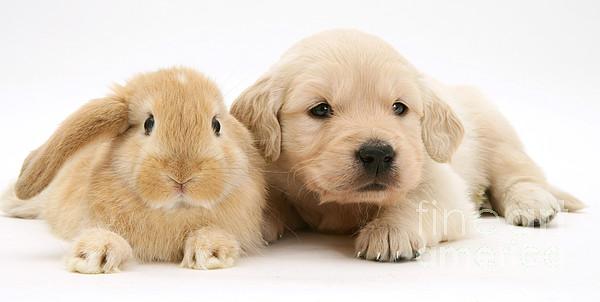 Lop Rabbit Photograph - Rabbit And Puppy by Jane Burton