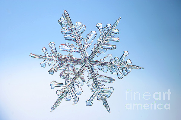 Snow Photograph - Snowflake by Ted Kinsman