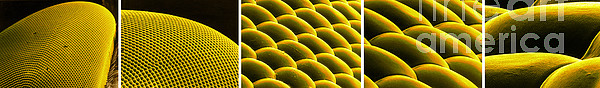 Scanning Electron Micrograph Photograph - Deer Fly Eye, Sem by Science Source
