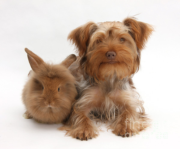 Animal Photograph - Puppy And Rabbit by Mark Taylor
