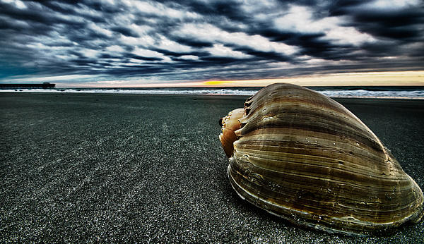 Photograph - Art Of The Sea by Calvin Smith