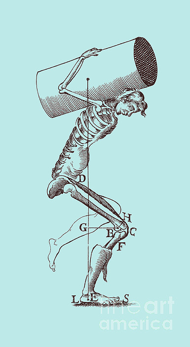 Anatomy Photograph - Biomechanics by Science Source
