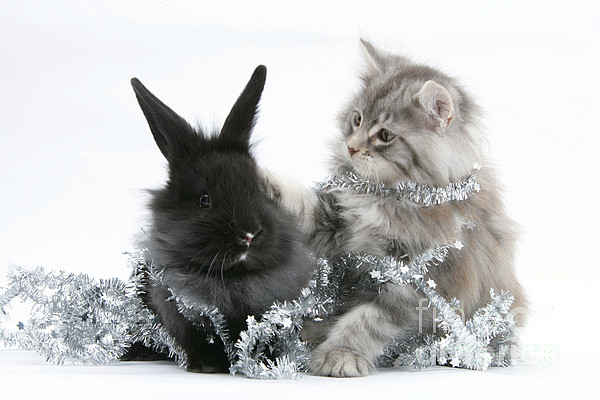 Animal Photograph - Kitten And Rabbit Getting Into Tinsel by Mark Taylor