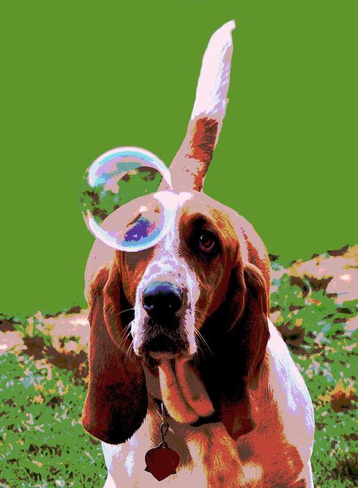 Dog Digital Art - Maisie In Green by Dorrie Pelzer