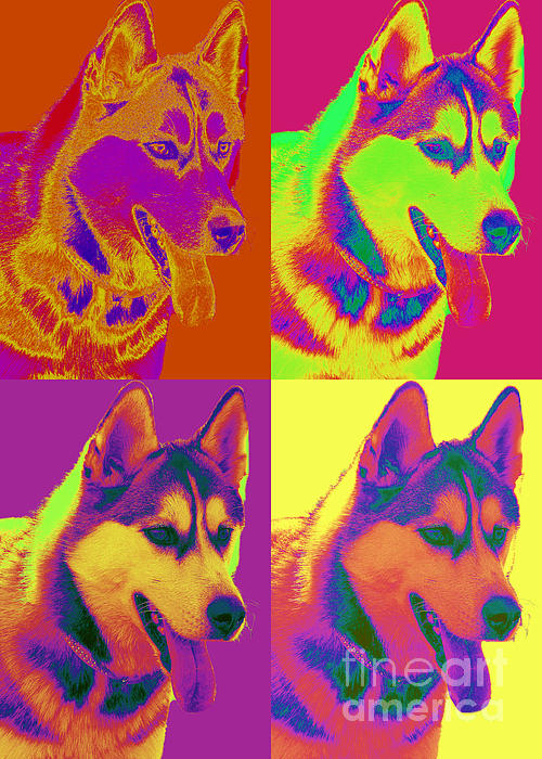 Siberian Husky Digital Art - Pop Art Siberian Husky by Renae Laughner