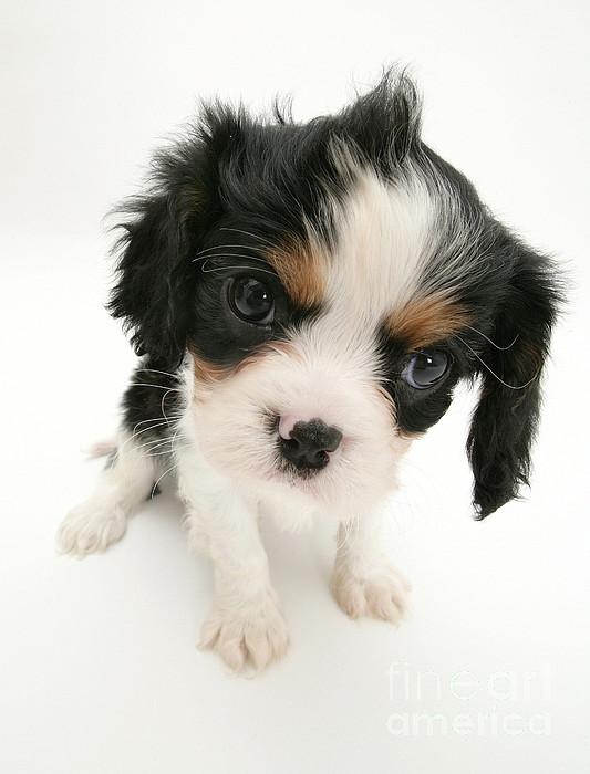 Animal Photograph - Puppy by Jane Burton