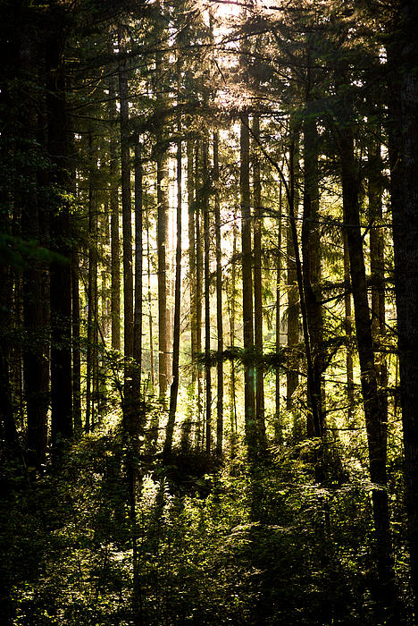 Nature Photograph - Untitled by Kimberly Deverell