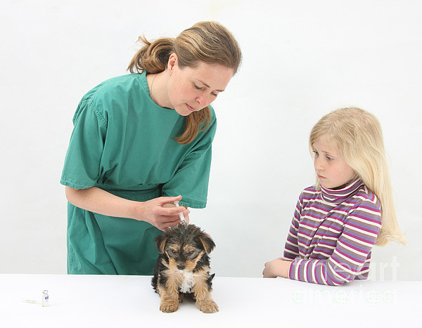 Fauna Photograph - Vet Giving Pup Its Primary Vaccination by Mark Taylor