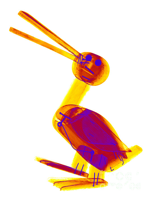 X-ray Photograph - X-ray Of A Wooden Duck Toy by Ted Kinsman