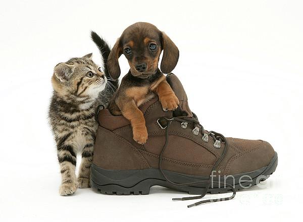 Animal Photograph - Kitten And Puppy by Jane Burton
