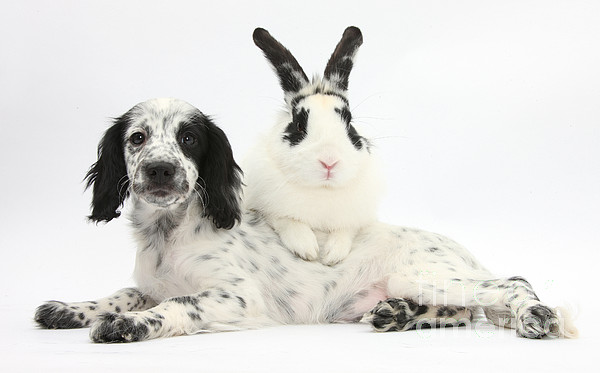 Nature Photograph - Puppy And Rabbit by Mark Taylor
