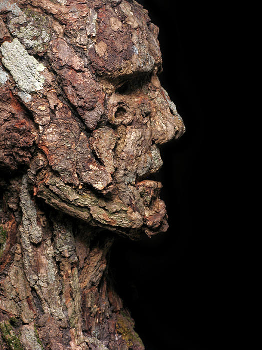 Groot Mixed Media - Revered  A Natural Portrait Bust Sculpture By Adam Long by Adam Long