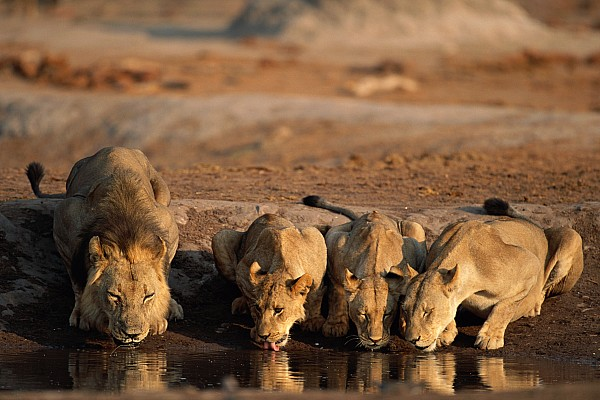 Untitled Photograph by Beverly Joubert