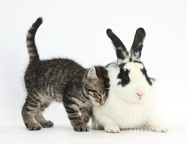 Nature Photograph - Kitten And Rabbit by Mark Taylor