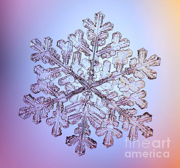 Snow Photograph - Snowflake by Ted Kinsman