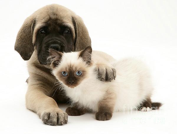 Animal Photograph - Puppy And Kitten by Jane Burton
