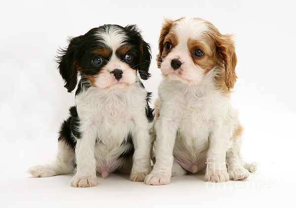 Animal Photograph - Puppies by Jane Burton