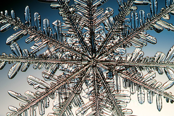 Snowflake Photograph - Snowflake by Ted Kinsman