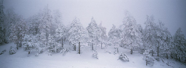 North America Photograph - A Blizzard On Spruce Mountain by Rich Reid