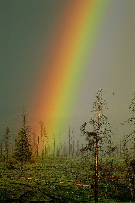 Montana Photograph - A Brilliantly Colored Rainbow Ends by Norbert Rosing