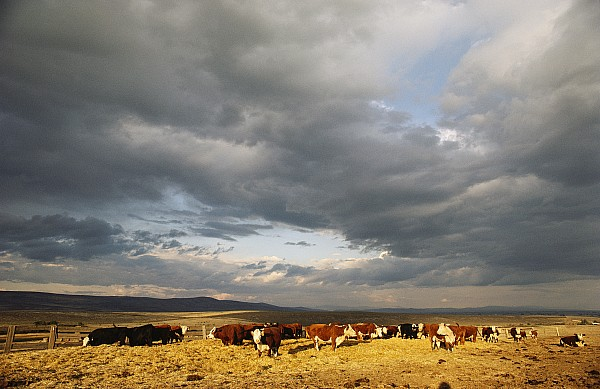 Animals Photograph - A Cloud-filled Sky Over A Yakima Valley by Sisse Brimberg