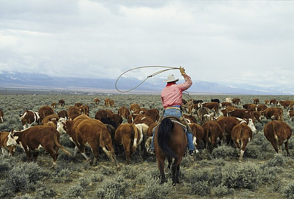 Western Livestock  Wyoming Ranch Tour