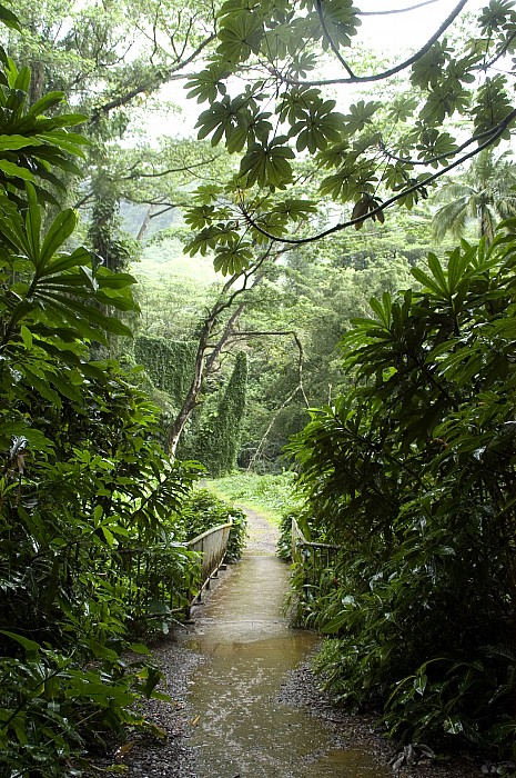 Manoa Falls Photograph - A Flooded Path At Manoa Falls by Stacy Gold