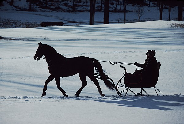 Sleigh Ride Photograph - A Horse-drawn Sleigh Ride At Twilight by Ira Block