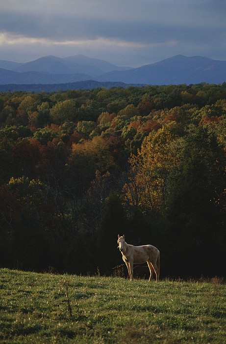 Scenes And Views Photograph - A Horse Stands On A Hill Overlooking by Sam Kittner