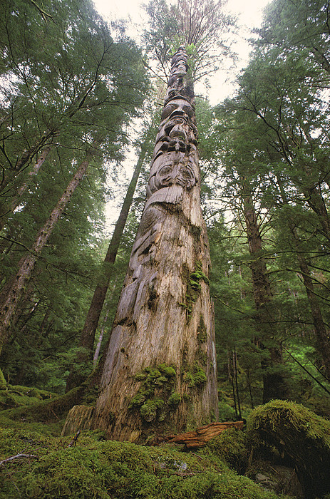 Subject Photograph - A Large Totem Pole Stands Amid Tall by Bill Curtsinger