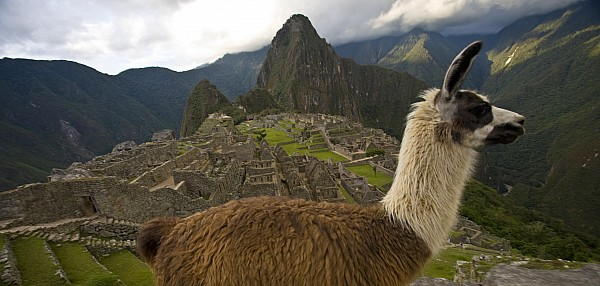 Outdoors Photograph - A Llama And Reconstructed Stone by Michael Melford