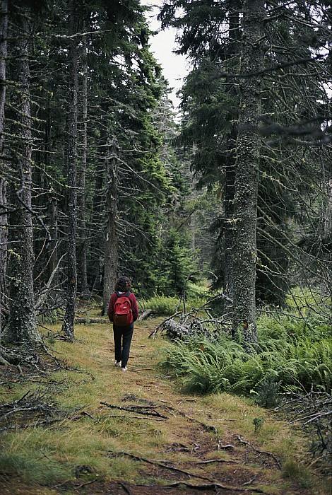 Isle Au Haut Photograph - A Lone Hiker Enjoys A Wooded Trail by Tim Laman