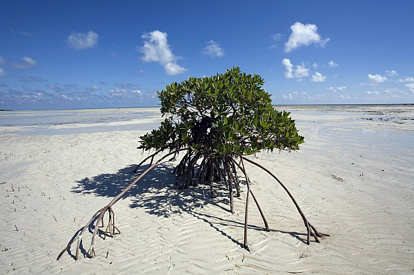 Day Photograph - A Lone Mangrove Tree On A Sand Spit by Scott S. Warren