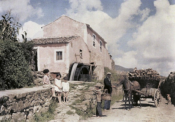 Day Photograph - A Man Transports Wood In Terceira by Wilhelm Tobien