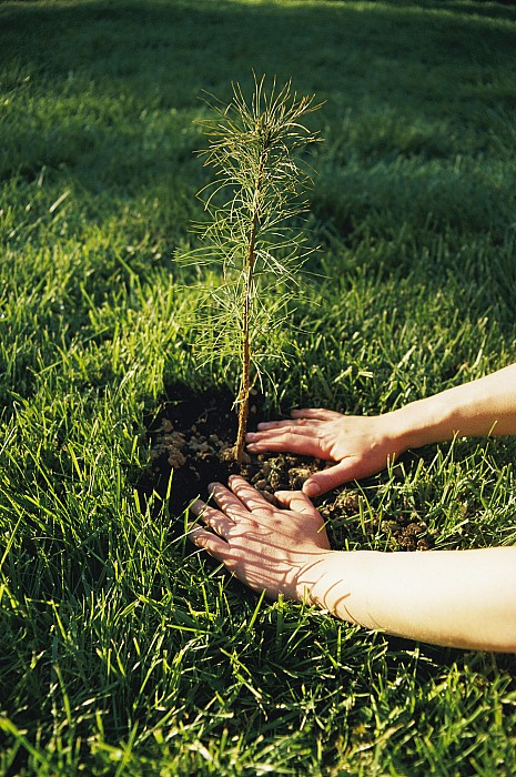 North America Photograph - A Pair Of Hands Gently Tamp Soil by Scott Sroka
