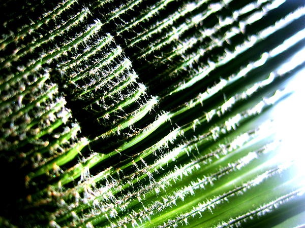 Palm Photograph - A Palmfrond by Catherine Natalia  Roche