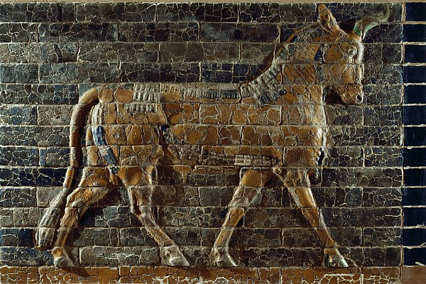 Indoor Photograph - A Relief Depicts A Bull by Lynn Abercrombie