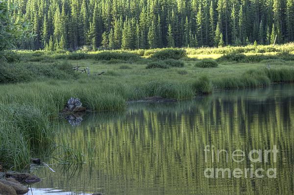 Willow Lake Photograph - A Study In Green by David Bearden